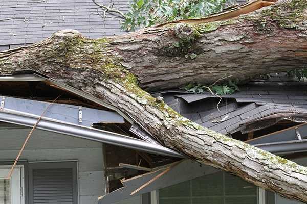 storm tree roof damage